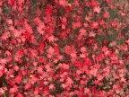 Autumn's Bloom