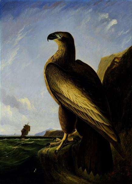 John_James_Audubon_-_Washington_Sea_Eagle_-_Google_Art_Project